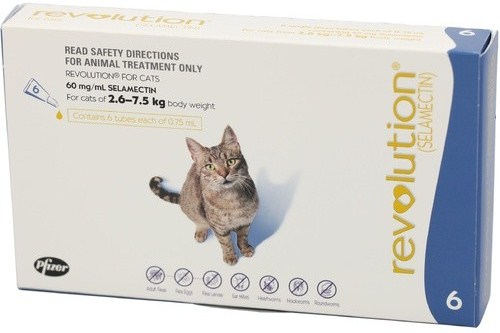 large-317010 REVOLUTION CAT BLU 6 S